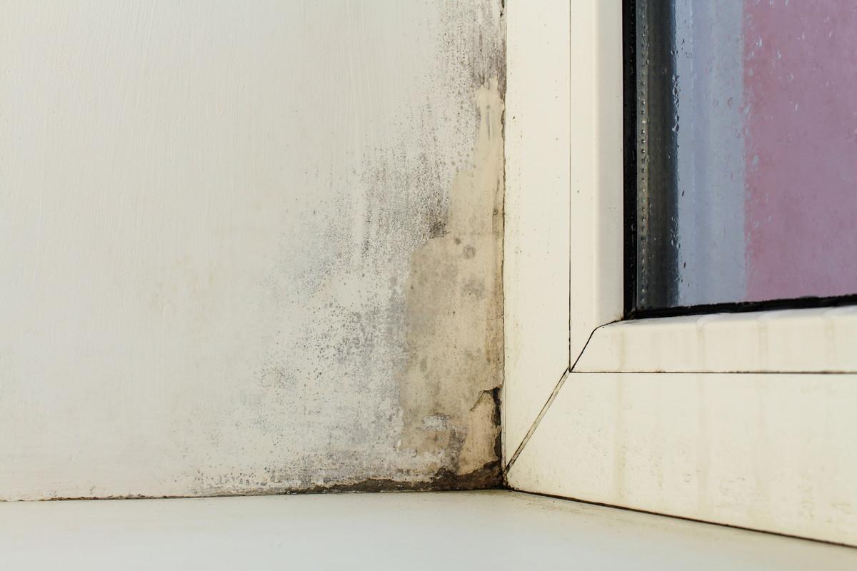 Devis Traitement Humidité  Dammarie-les-Lys → Prix : Entreprise, diagnostic remontées capillaires murs